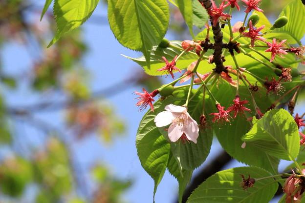 Photos: 初夏の予感