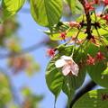 写真: 初夏の予感