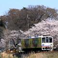 写真: 常総の春