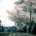 写真: 花咲く小駅