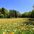 写真: Spring Is Here