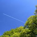 写真: 新緑 Sky High