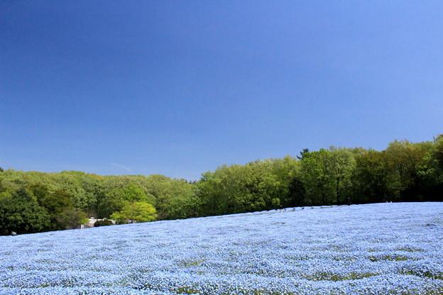 写真: ブルーな大地