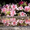 写真: 花鏡