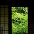写真: 窓の向う側