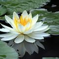 写真: 水上花