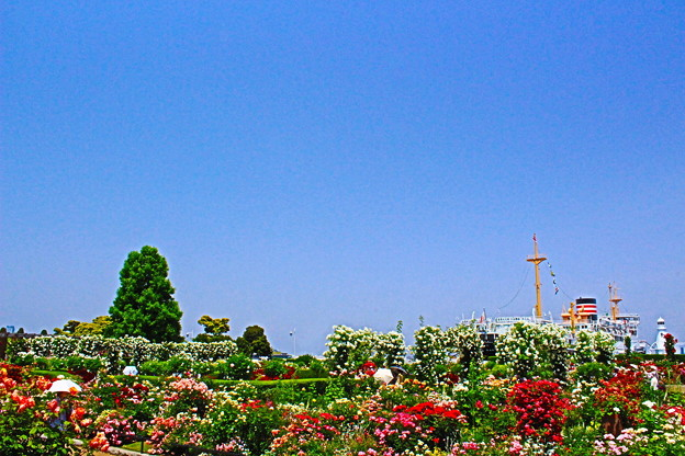 臨海バラ園