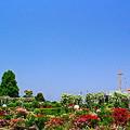 写真: 臨海バラ園