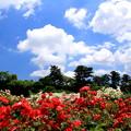 写真: 森の花園