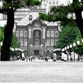 写真: みどりな東京