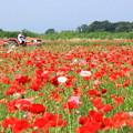 写真: メルヘンチック・トラクター・ライド