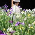 写真: 六月の花嫁