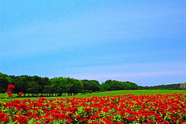 写真: 湘南フラワー