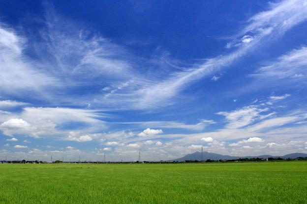 Photos: 青空アート