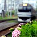 写真: 水無月の鎌倉路