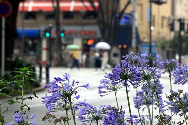 Photos: 開港地に咲く花