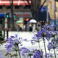 開港地に咲く花