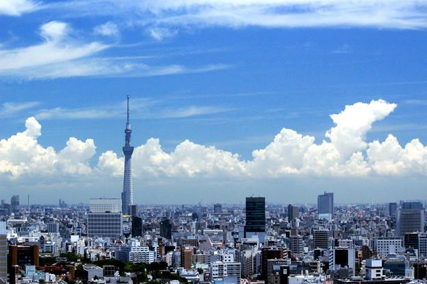 Hot Summer Tokio