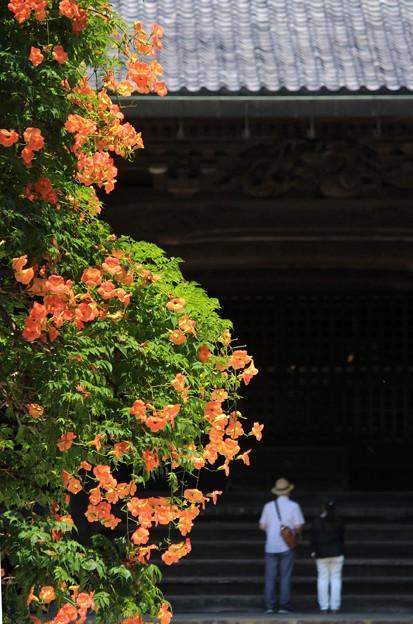 古都の夏花