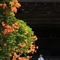 写真: 古都の夏花