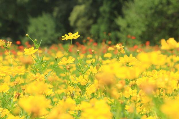 真夏の花畑