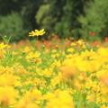 写真: 真夏の花畑