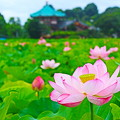 Photos: 浄土の華