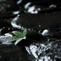写真: 文月の雨
