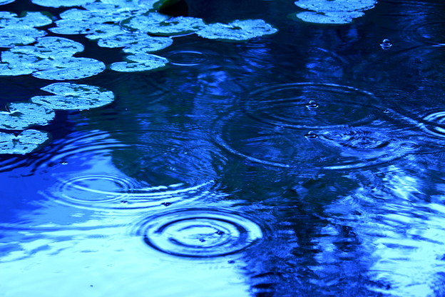 Circles On The Water