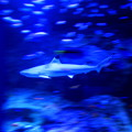 Photos: Swimming With A Shark