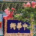 写真: 南京夏花