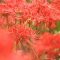 写真: Red In Red