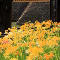 写真: 黄の山門