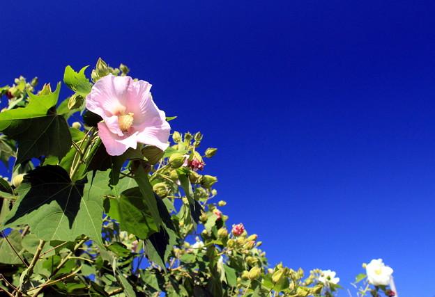 写真: 酔い花