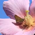 写真: 花ベッド