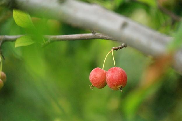 Little Twin Apples