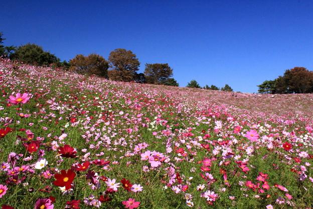 Photos: 秋の丘