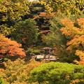 写真: 色づく庭園