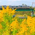 写真: 秋の河川敷