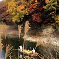 写真: 秋の川下り