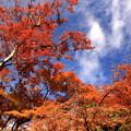 Photos: 空に朱