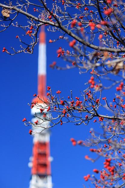 ミズキとタワー