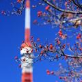 Photos: ミズキとタワー