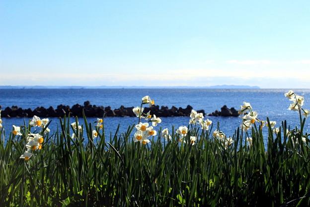 海辺の冬花