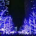 写真: 光の並木道