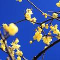 Photos: 春の便り