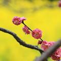 写真: 春はもうすぐ