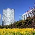 都会の花畑