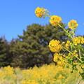 Photos: 春の元気