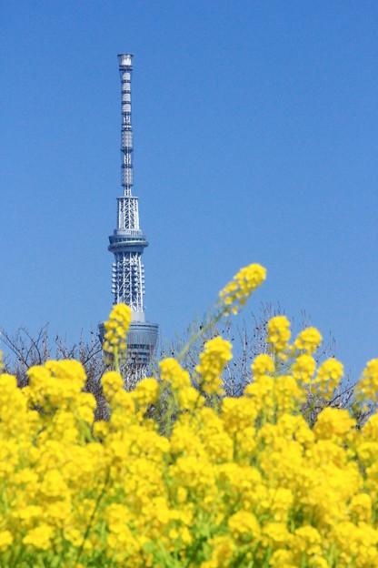 春色タワー